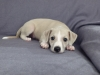 hundebilder-11-12-2012-031